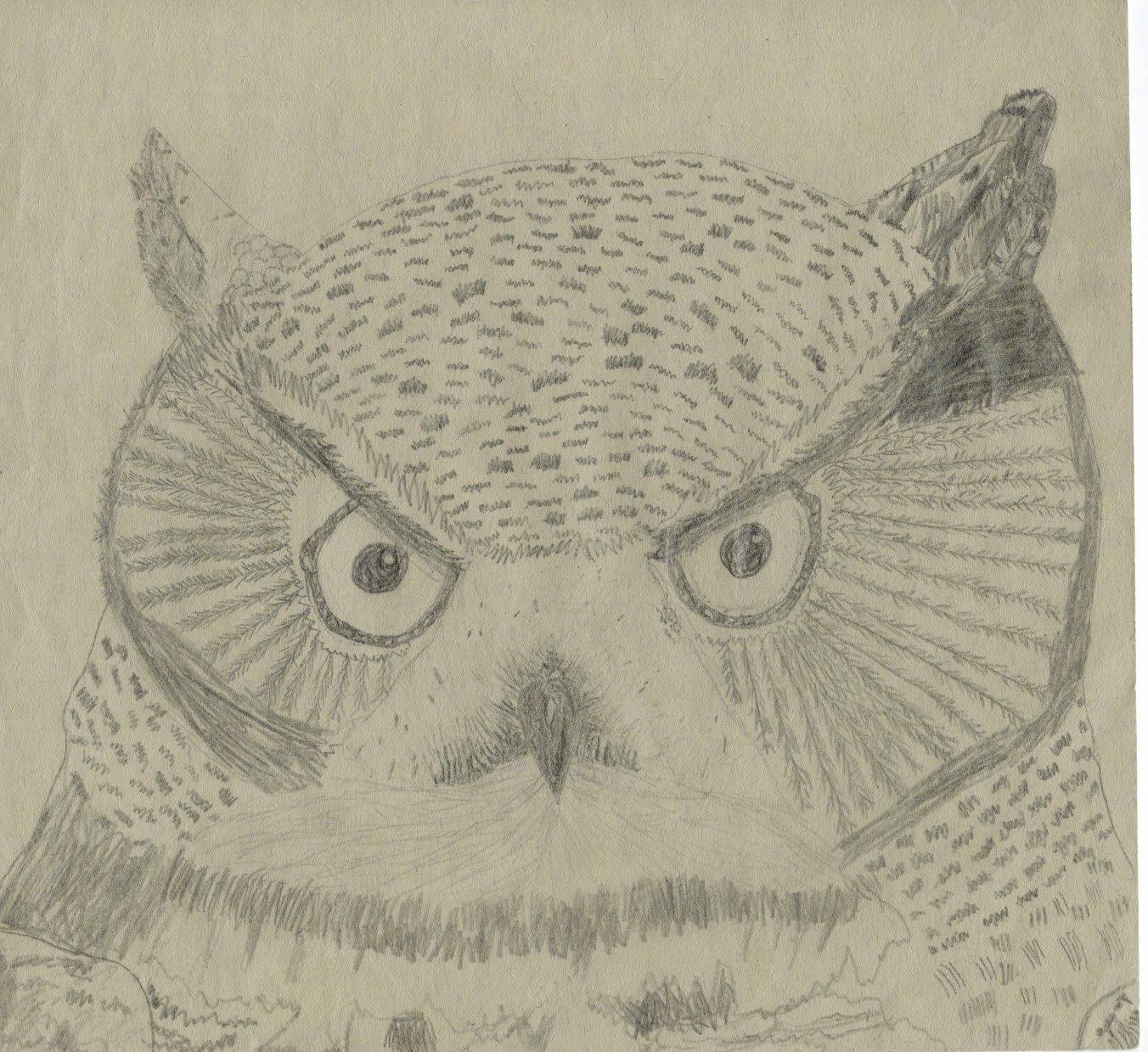 Elsas owl (Mar 2016)